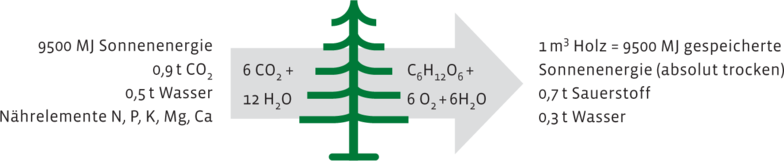 Photosynthese CO2